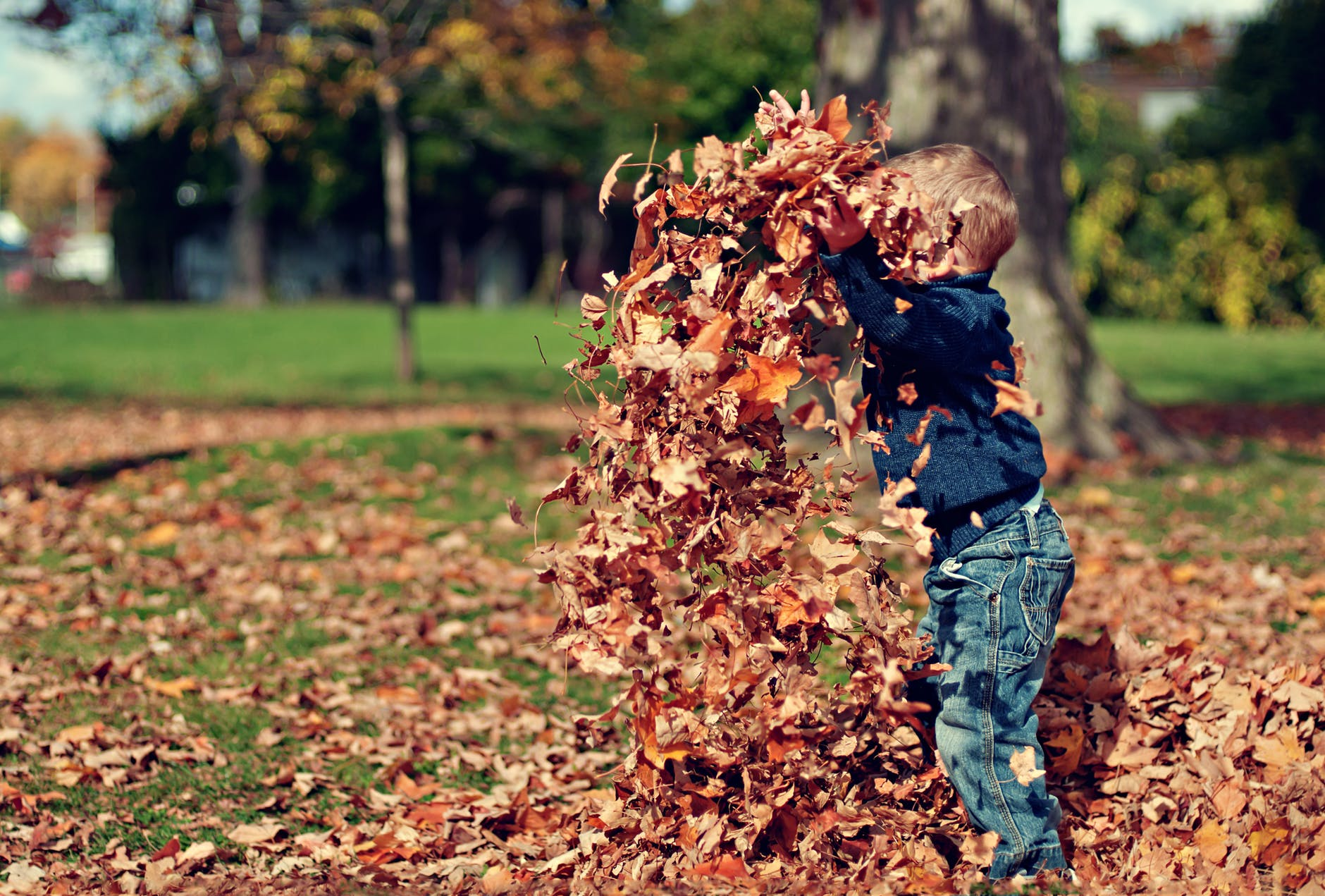 toddler boy playing with autumn leaves